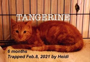 tangerine 2:217:21