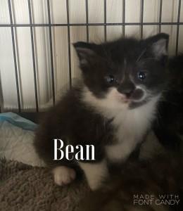 bean 5:9:21 w:becky