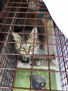 holt city kittens-