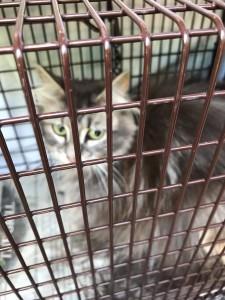 holt city kittens==