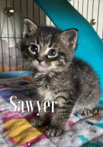 sawyer w:becky borse 5-9-21